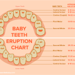 Baby Teeth - They Fall Out, So Why Are They So Important?