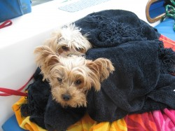 A cute bundled up dog